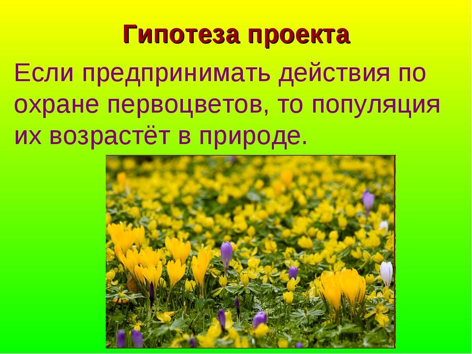 Гипотеза проекта Если предпринимать действия по охране первоцветов, то популя...