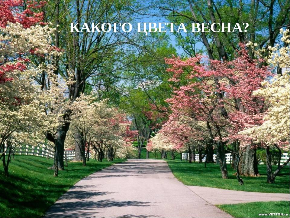КАКОГО ЦВЕТА ВЕСНА? Лазарева Лидия Андреевна, учитель начальных классов, Рижс...