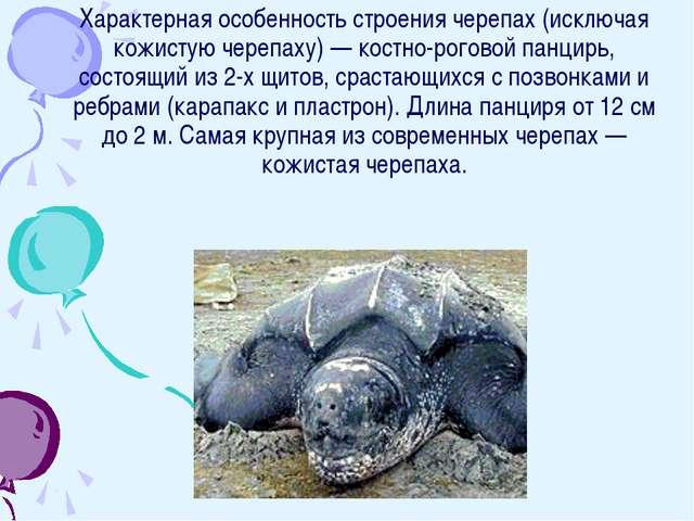 Характерная особенность строения черепах (исключая кожистую черепаху) — костн...