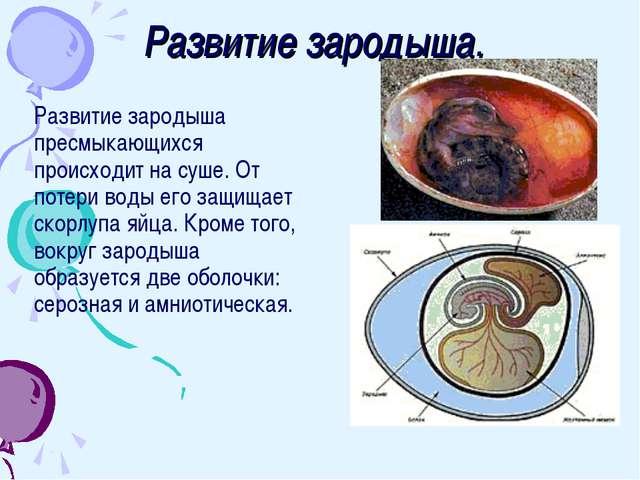 Развитие зародыша. Развитие зародыша пресмыкающихся происходит на суше. От по...