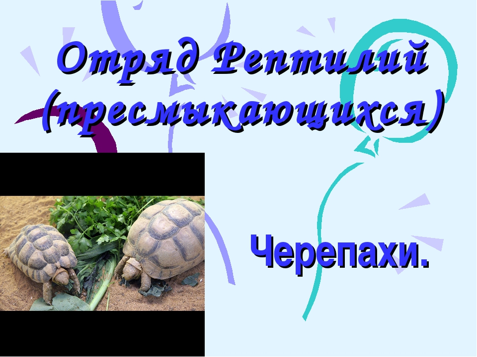 Отряд Рептилий (пресмыкающихся) Черепахи.