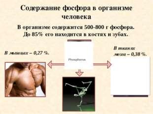 Содержание фосфора в организме человека В тканях мозга – 0,38 %. В мышцах – 0
