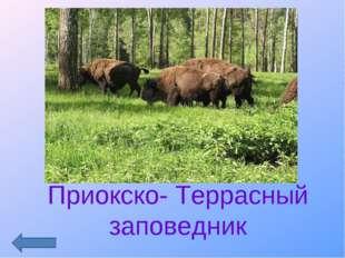 Приокско- Террасный заповедник