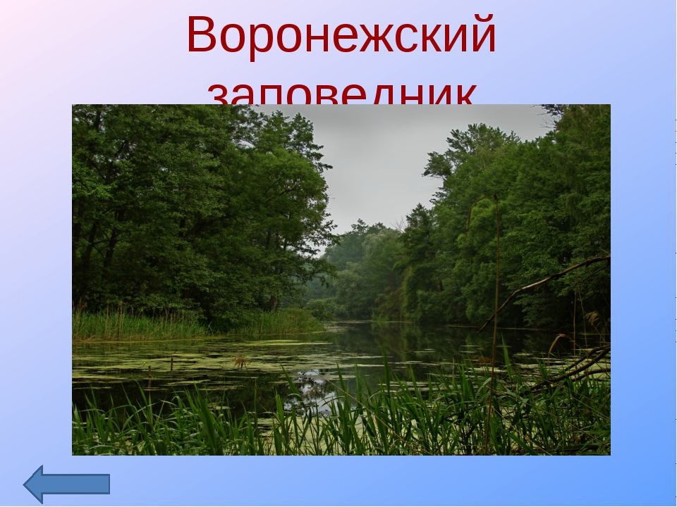 Воронежский заповедник
