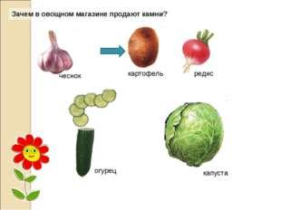Зачем в овощном магазине продают камни?. огурец капуста чеснок картофель редис