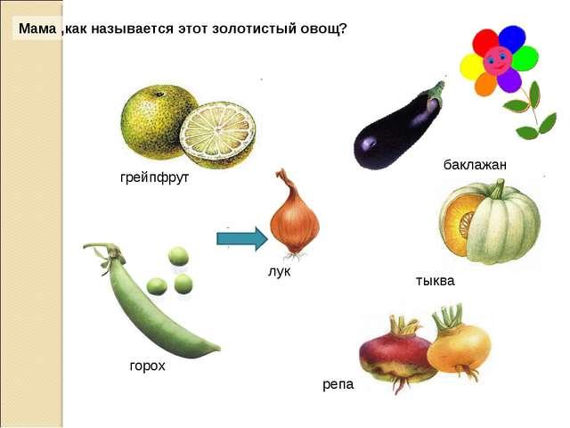 Мама ,как называется этот золотистый овощ? грейпфрут тыква горох репа лук бак...