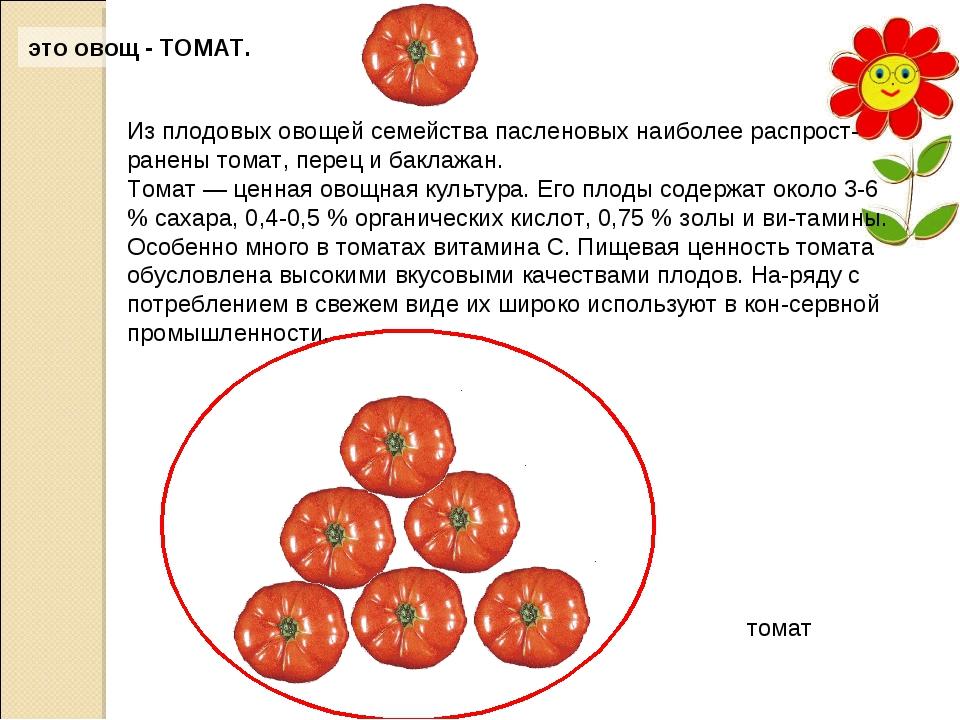 это овощ - ТОМАТ. Из плодовых овощей семейства пасленовых наиболее распростр...