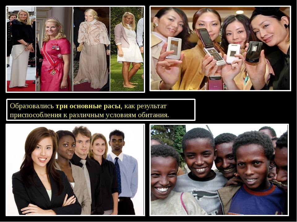 Образовались три основные расы, как результат приспособления к различным усл...