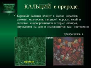 КАЛЬЦИЙ в природе. Карбонат кальция входит в состав кораллов, раковин моллюск