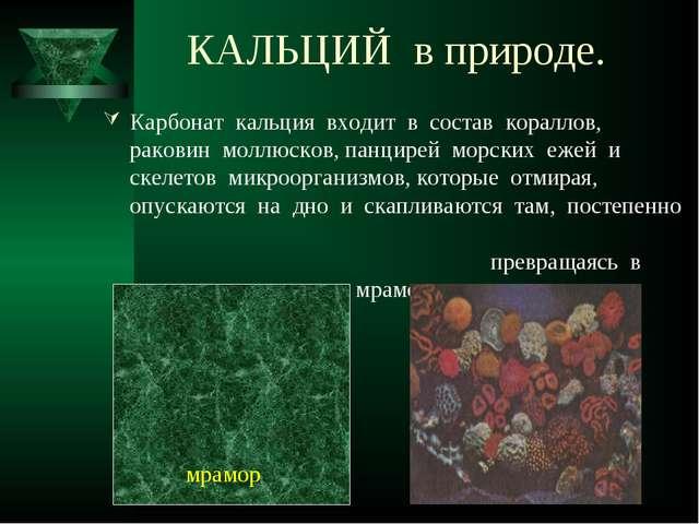 КАЛЬЦИЙ в природе. Карбонат кальция входит в состав кораллов, раковин моллюск...