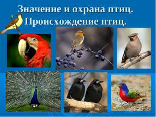 Значение и охрана птиц. Происхождение птиц.