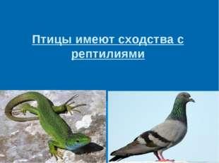 Птицы имеют сходства с рептилиями