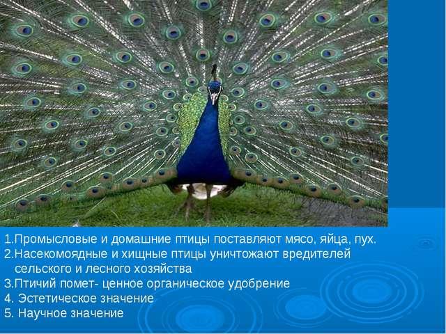 1.Промысловые и домашние птицы поставляют мясо, яйца, пух. 2.Насекомоядные и...