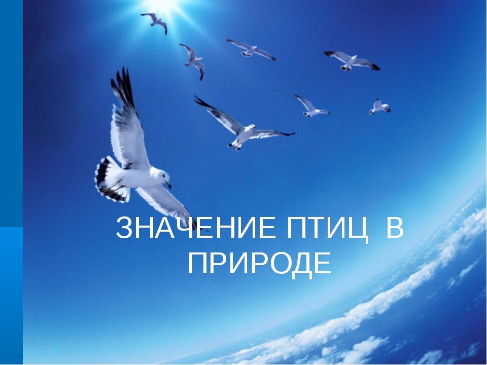 Значение птиц в природе ЗНАЧЕНИЕ ПТИЦ В ПРИРОДЕ