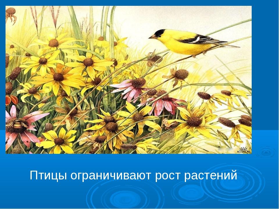 Птицы ограничивают рост растений