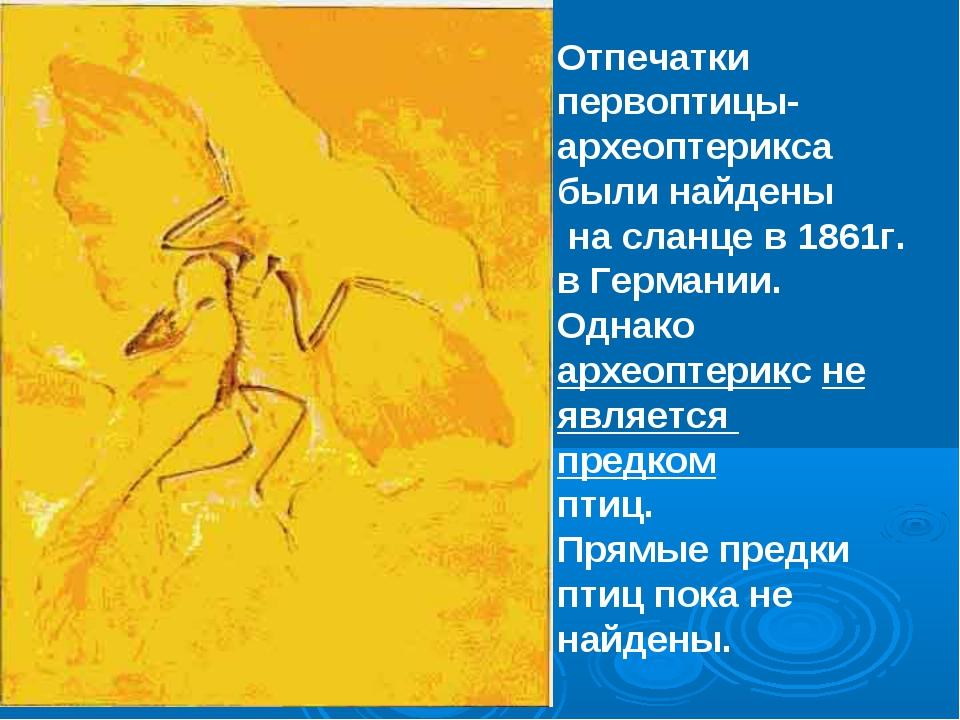 Отпечатки первоптицы-археоптерикса были найдены на сланце в 1861г. в Германии...
