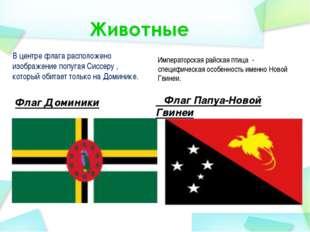 В центре флага расположено изображение попугая Сиссеру , который обитает толь