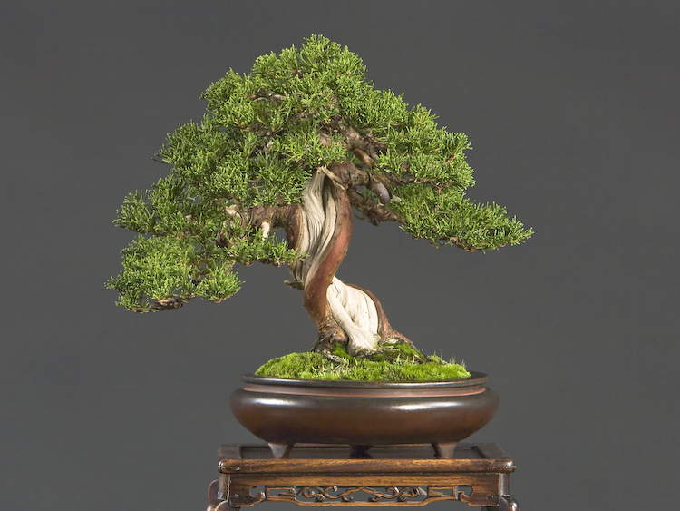 http://flowercities.ru/images/art003/bonsai4_big.jpg