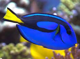 Картинки по запросу картинка рыба