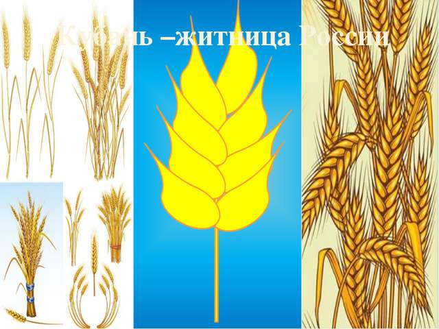 Кубань –житница России