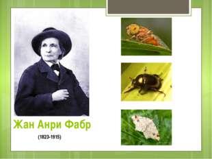 Жан Анри Фабр (1823-1915)