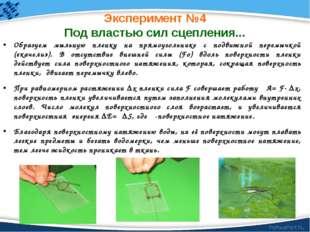 Эксперимент №4 Под властью сил сцепления... Образуем мыльную пленку на прямоу