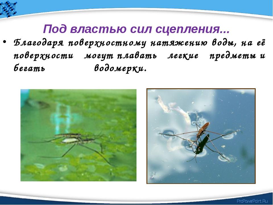 Под властью сил сцепления... Благодаря поверхностному натяжению воды, на её...