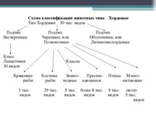 Схема классификации животных типа Хордовые Тип Хордовые 50 тыс. видов Подтип