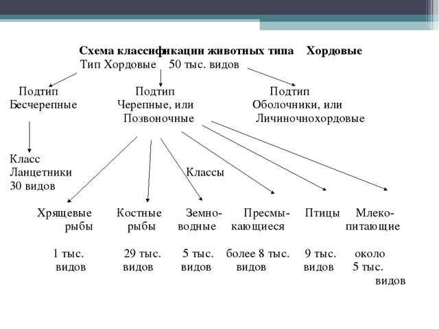 Схема классификации животных типа Хордовые Тип Хордовые 50 тыс. видов Подтип...