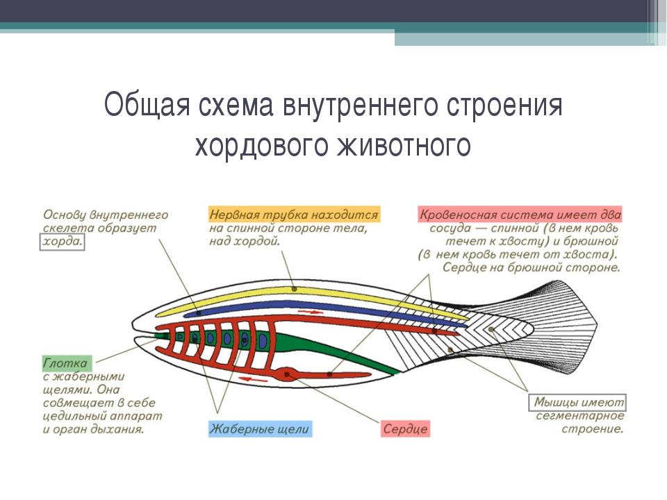 схема внутреннего строения
