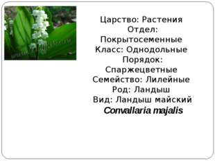 Царство: Растения Отдел: Покрытосеменные Класс: Однодольные Порядок: Спаржецв