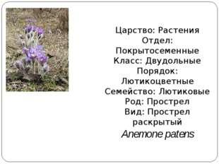 Царство: Растения Отдел: Покрытосеменные Класс: Двудольные Порядок: Лютикоцве
