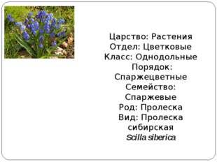 Царство: Растения Отдел: Цветковые Класс: Однодольные Порядок: Спаржецветные