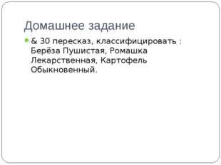 Домашнее задание & 30 пересказ, классифицировать : Берёза Пушистая, Ромашка Л
