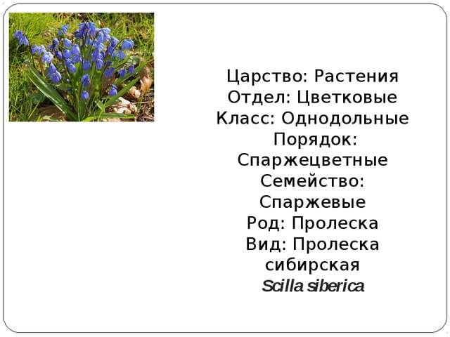 Царство: Растения Отдел: Цветковые Класс: Однодольные Порядок: Спаржецветные...