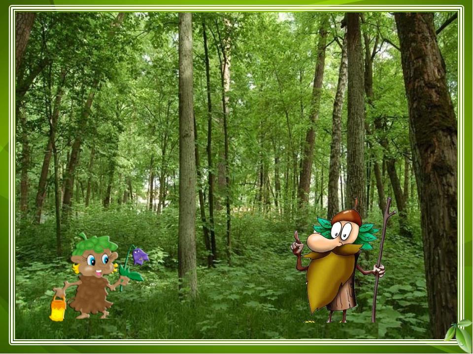 кустарники травы ? ? ? деревья