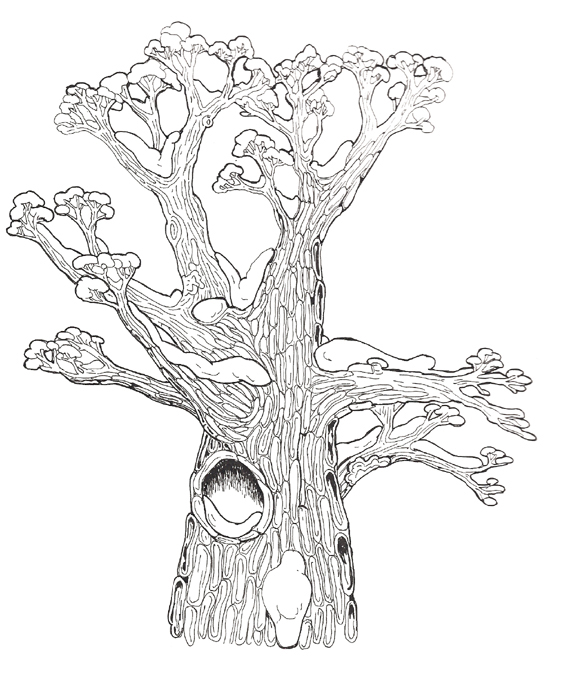 the_mitten_mural_hollow_tree_top_coloring_page_reversed.jpg
