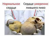 бычье сердце 2.jpg