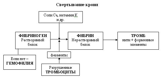 C:\Program Files\Образовательные комплексы\Биология, 8 кл. Человек\edu_r75_bio8\data\res\res03B443CF-0A01-022A-0142-9CB2BEA621DF