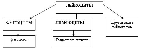 C:\Program Files\Образовательные комплексы\Биология, 8 кл. Человек\edu_r75_bio8\data\res\res03B4437F-0A01-022A-0039-060B100DAB6B