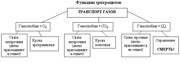 C:\Program Files\Образовательные комплексы\Биология, 8 кл. Человек\edu_r75_bio8\data\res\res03B4437A-0A01-022A-01A1-333890810140