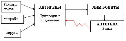 C:\Program Files\Образовательные комплексы\Биология, 8 кл. Человек\edu_r75_bio8\data\res\res03B4438F-0A01-022A-01C7-F37D277D2EBD