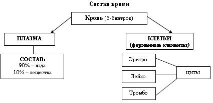 C:\Program Files\Образовательные комплексы\Биология, 8 кл. Человек\edu_r75_bio8\data\res\res03B443A3-0A01-022A-01E4-905AC93D8BE2