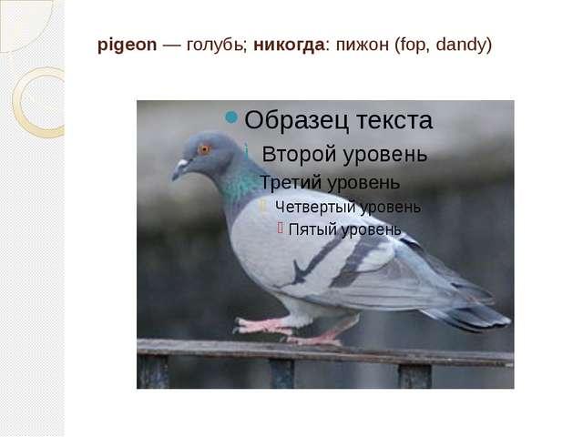 pigeon — голубь; никогда: пижон (fop, dandy)