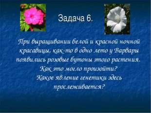 Задача 6. При выращивании белой и красной ночной красавицы, как-то в одно лет