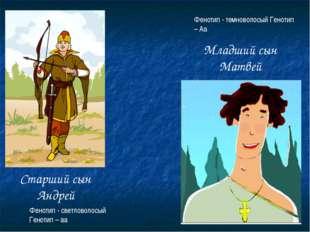 Старший сын Андрей Младший сын Матвей Фенотип - светловолосый Генотип – аа Фе