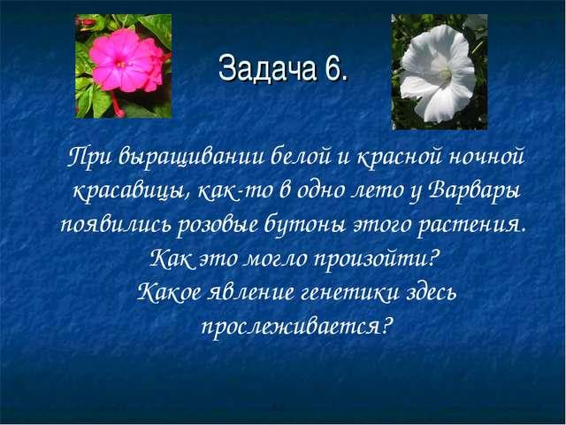 Задача 6. При выращивании белой и красной ночной красавицы, как-то в одно лет...