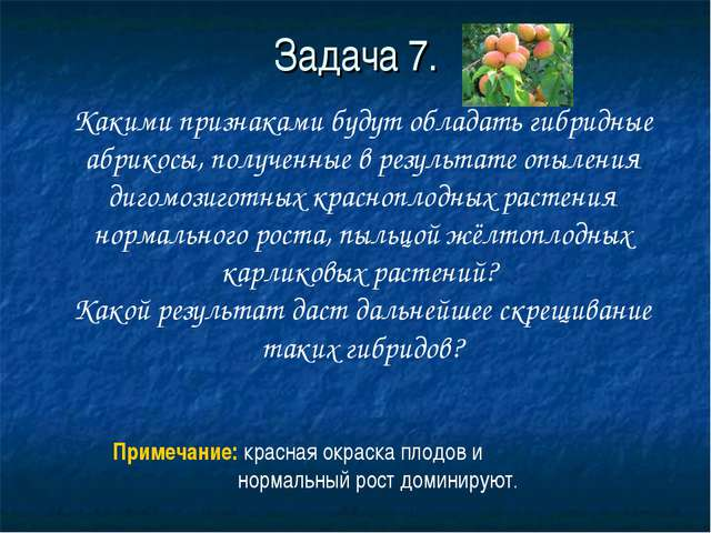 Задача 7. Какими признаками будут обладать гибридные абрикосы, полученные в р...