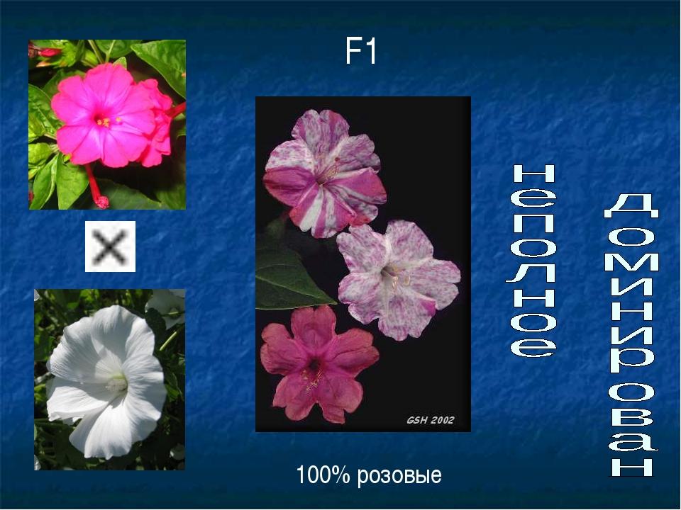 F1 100% розовые