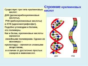 Существует три типа нуклеиновых кислот: ДНК (дезоксирибонуклеиновые кислоты),